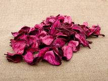 Pink potpourri Stock Image