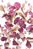 Pink potpourri Stock Images