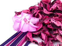 Pink potpourri with incenses and pink flower Royalty Free Stock Photos