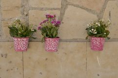Pink pots on stone wall Stock Photography