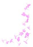 Pink primrose Stock Image