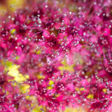 Pink Profusion Stock Photography
