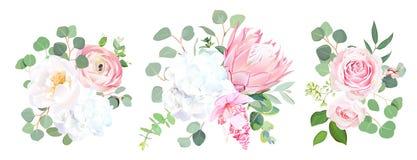 Pink protea, ranunculus, rose, medinilla, white hydrangea, seede stock illustration