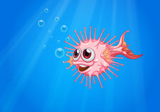 A pink puffer fish in the ocean Royalty Free Stock Images