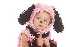 Pink Puppy Royalty Free Stock Photos