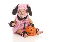 Pink Puppy Royalty Free Stock Photo
