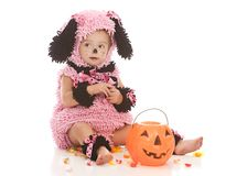 Pink Puppy Stock Images