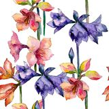 Pink and purple amaryllis floral botanical flower. Watercolor background illustration set. Seamless background pattern. Pink and purple amaryllis flower. Wild royalty free illustration