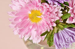 Pink and purple asters Royalty Free Stock Photos