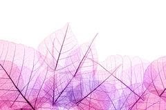 Pink and Purple  Border of  transparent Leaves - isolated on whi Royalty Free Stock Photo