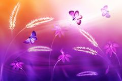 Pink and purple butterflies against a background of wild flowers in purple and yellow tones. Fantastic natural summer artistic im royalty free stock images