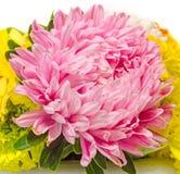 Pink, purple colored Chrysanthemum flowers, bouquet, close up, floral arrangement. Royalty Free Stock Photos