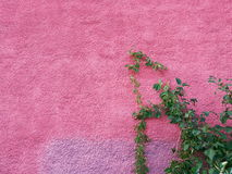 Pink purple concrete wall and grass Stock Images