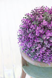 Pink and purple decoration plant Stock Images
