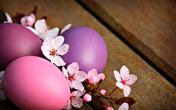 Pink and purple Easter eggs with flowers Stock Photography