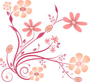 Pink and Purple Flower Vector on white background Royalty Free Stock Image
