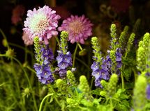 pink and purple flowers Royalty Free Stock Photo
