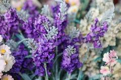 Purple flowers. stock image
