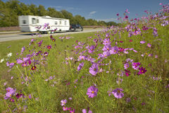 Pink and purple flowers blooming along interstate highway as trailer drives by Royalty Free Stock Photo