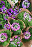 Pink Purple Flowers (2). Overview of Pink Purple Flowering Plants in Paper Stock Image