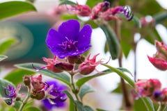 Pink and purple fuschia variety flowers Stock Image