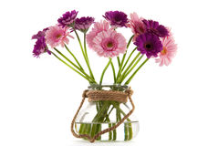 Pink and purple Gerber flowers. Bouquet purple and pink Gerber flowers isolated over white background stock images