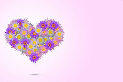 Pink purple heart shaped lotus flowers on pale pink background Royalty Free Stock Photography