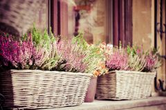 Pink and purple heather in decorative flower pot Royalty Free Stock Photos