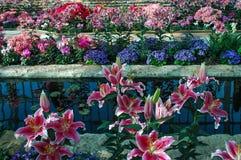 Spring indoor garden stock photography