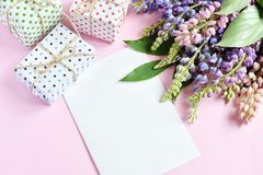 Pink, purple lupine flowers, gifts and empty paper sheet on pink background. Birthday, Mother`s day, Valentine`s Day, March 8, stock photos