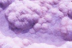 Pink Purple Nature patterns texture Stock Photos