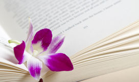 Pink purple orchid flower resting in a book. Close up of a pink orchid flower resting in the pages of a book Stock Photography