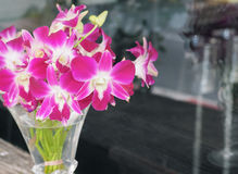 Pink and purple orchid in a glass vase Royalty Free Stock Photography