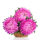 Pink and purple peony bunch isolated on white background stock photos