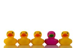 Pink, purple rubber duck with yellow ducks Royalty Free Stock Photo