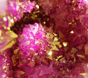 Pink, Purple, Violet, Flora royalty free stock photography