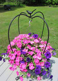 Pink and Purple Wave Petunia in Iron Hanger. These are purple and pink wave petunia hanging in a black iron planter Royalty Free Stock Photos