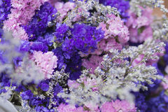 Pink, purple and white Gypsophila flower Royalty Free Stock Photography