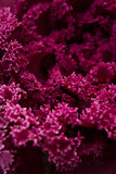 Pink and purplr Flowers Blooming Royalty Free Stock Photography
