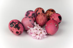 Pink quail easter eggs with flower isolated on white background Stock Photo