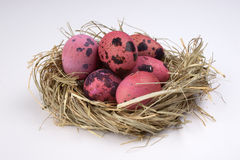 Pink quail easter eggs in nest  isolated on white  background Stock Images