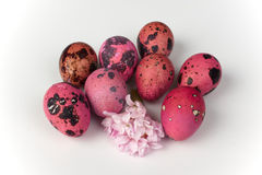 Pink quail eggs with flower  on white background Royalty Free Stock Photo