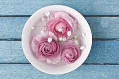 Pink ranunculus Royalty Free Stock Photography