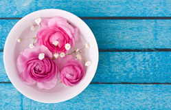 Pink ranunculus Stock Images