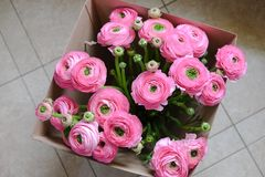 Pink Ranunculus bouquet in a cardboard box on the floor. Top view. For flower delivery, social media. Soft selective focus. stock image