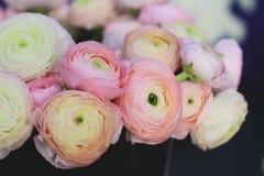 Pink ranunculus bouquet. Selective focus image Stock Image