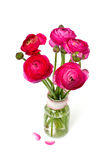 Pink ranunculus in a glass vase Royalty Free Stock Photography