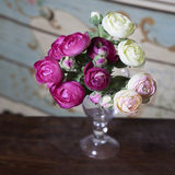 Pink ranunculus (persian buttercup) Royalty Free Stock Images