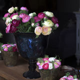 Pink ranunculus (persian buttercup) Royalty Free Stock Photography