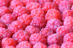 Pink raspberry Stock Photography
